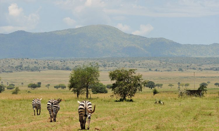 Safari to Kidepo