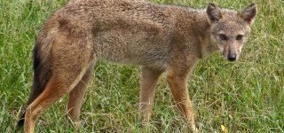 Wildlife in Kidepo