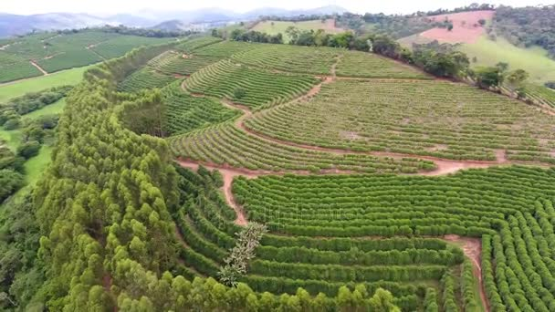 Coffee Plantations
