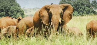 18 Days Best Of Uganda Game Viewing Safari18 Days Best Of Uganda Game Viewing Safari