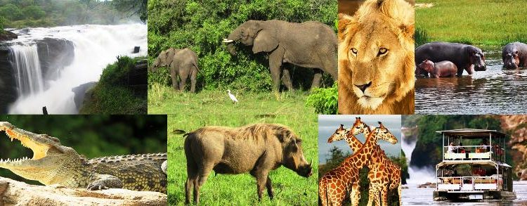 Tours to Uganda National Parks