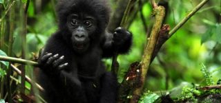 3 Days Flying Safari to Bwindi