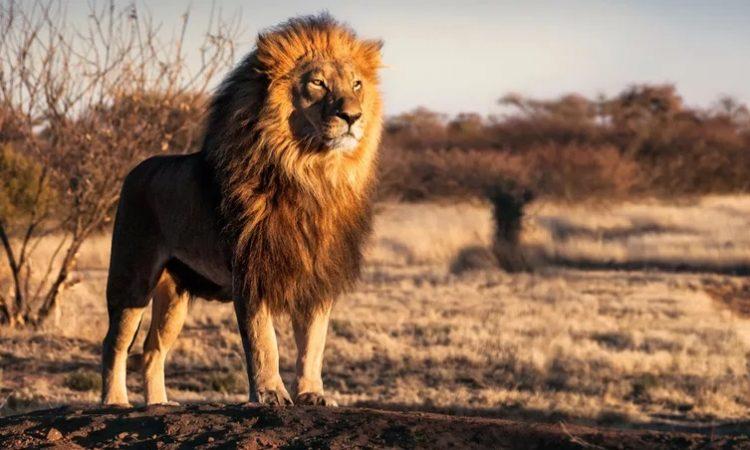 5 Days Kidepo National Park