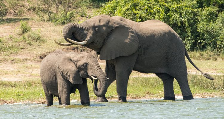 7 Days Kidepo & Murchison Falls Safari