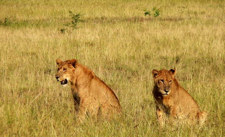 Best time to visit Kidepo Valley National Park