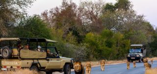 Game Viewing Safaris