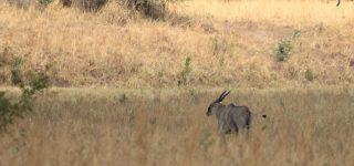 Kidepo national park and maasai mara game reserve