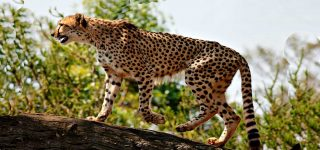Mammals in Kidepo