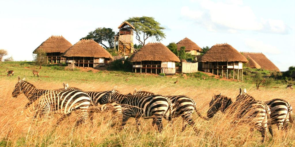 9 Days fly in safari to Bwindi and Kidepo national park