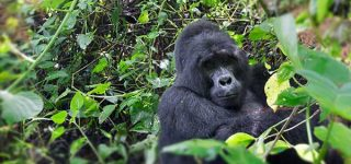 9 Days Bwindi Gorilla Trekking and Kidepo Wildlife Safari