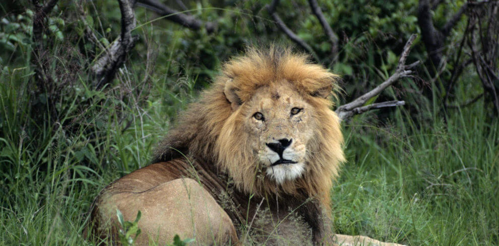 9 Days Murchison Falls, Kidepo and Pian Upe Wildlife Reserve