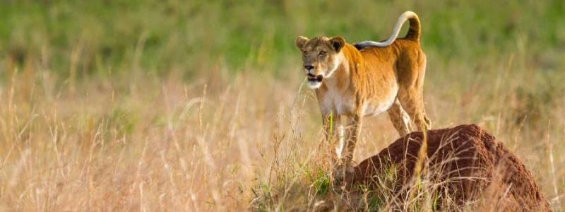 10 Days Discover Karamoja Safari