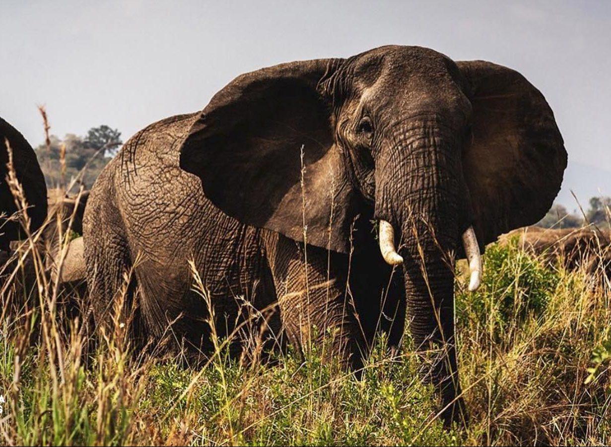 10 Days Karamoja Cultural Tour & Wildlife Safari