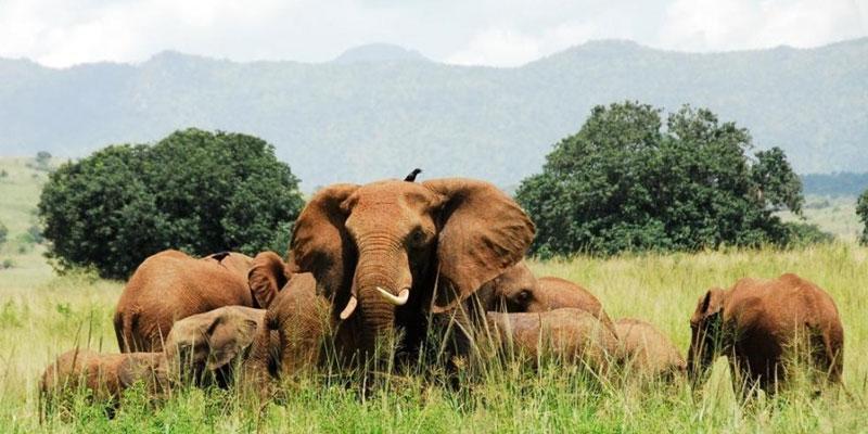 5 Days Aruu Falls & Kidepo Wildlife Safari