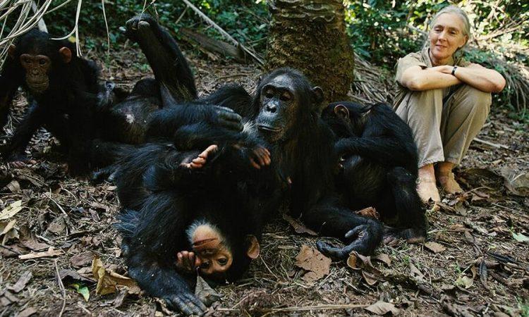 7 Days 10 Days Uganda safari